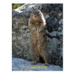 Standing Squirrel Postcards