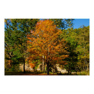 Standout Autumn Tree Posters