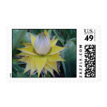 Stange and unsual plant postage stamp