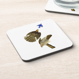 Stanley Hawk John James Audubon Birds of America Drink Coaster