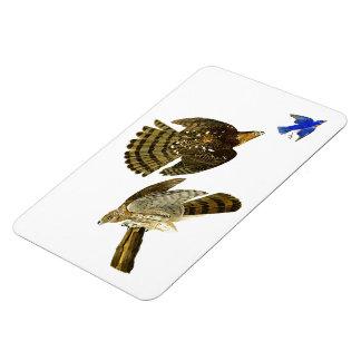 Stanley Hawk John James Audubon Birds of America Magnet