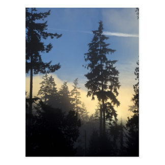 Stanley Park, woods, marine layer fog rolling in Postcard