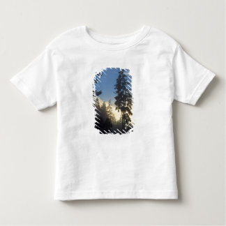 Stanley Park, woods, marine layer fog rolling in Toddler T-shirt