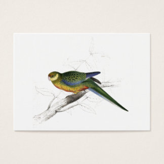 Stanley Parrakeet (young male) by Edward Lear Business Card