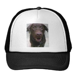 StanleyChocolateLab Trucker Hat
