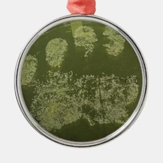 Staph in a Petridish on Mannitol Salt Agar Metal Ornament
