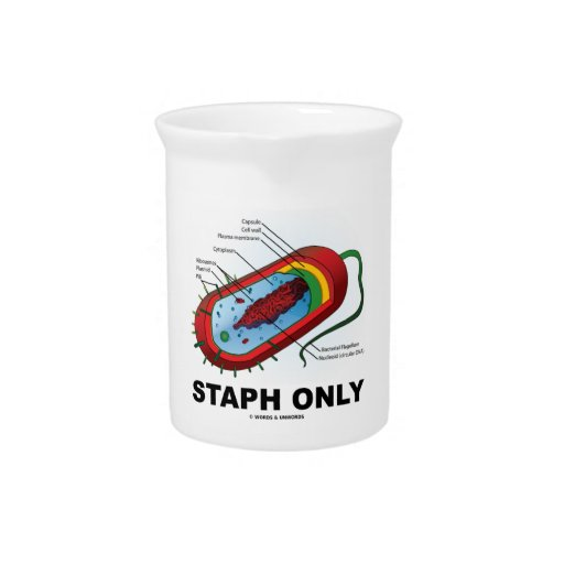 Staph Only (Bacterium Diagram Prokaryote Bacteria) Drink Pitcher