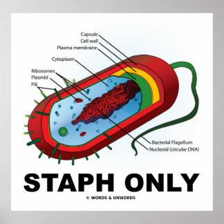Staph Only (Bacterium Diagram Prokaryote Bacteria) Poster