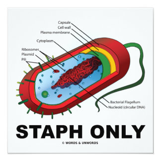 Staph Only (Microbiology Prokaryote Bacterium) Card