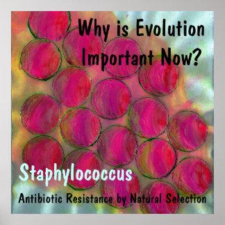 ¿Staph, por qué es la evolución importante ahora?  Impresiones