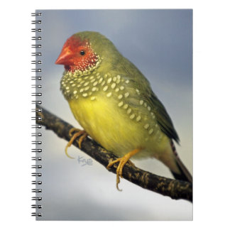 Star Finch Notebook