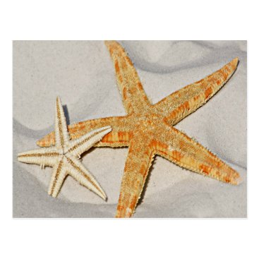 Beach Themed Star Fish at the Beach Postcard