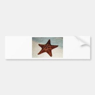 Star Fish Bumper Stickers