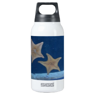 Star Fish Insulated Water Bottle