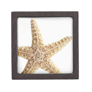 Star fish jewelry box