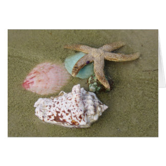 Star Fish n Sea Shells Greeting Card