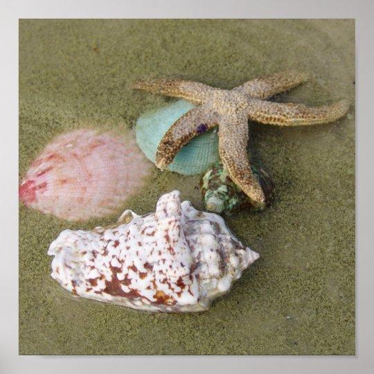 Star Fish N Shells Poster