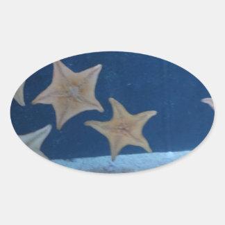 Star Fish Oval Sticker