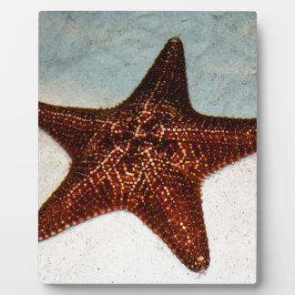 Star Fish Plaque