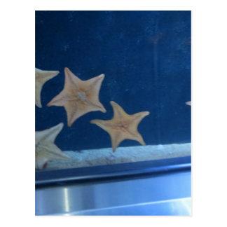 Star Fish Postcard