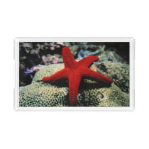 Star Fish | Red Sea Acrylic Tray