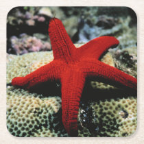 Star Fish | Red Sea Square Paper Coaster