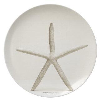 Star fish shell dinner plate