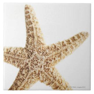 Star fish tile