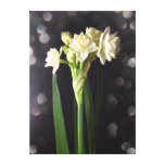 "Star Flower ""Baby Grow-Tiny"" Canvas Print"