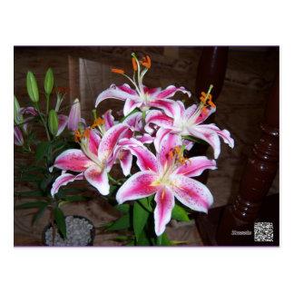 star gazer postcard