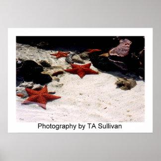 Star Light, Star Bright  by TDGallery Print