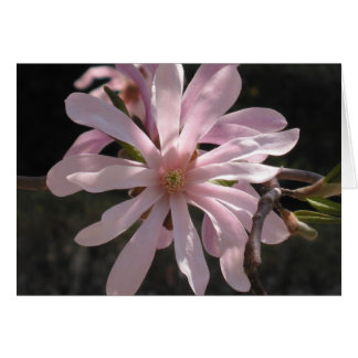 Star Magnolia Card