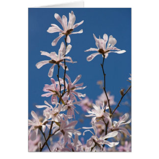 Star magnolia. Card by cARTerART