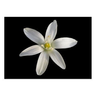 Star of Bethlehem ~ ATC card Large Business Cards (Pack Of 100)