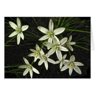 Star of Bethlehem Birthday Card