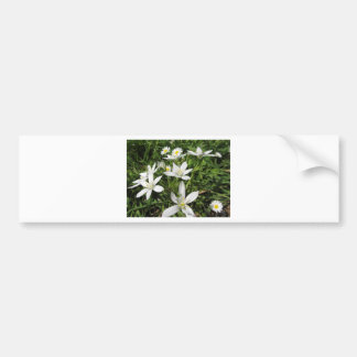 Star of Bethlehem flowers and daisies Bumper Sticker