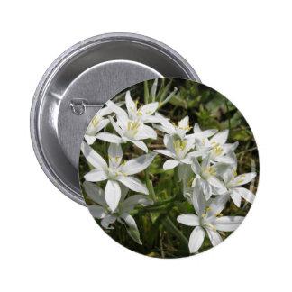 Star of Bethlehem flowers  Ornithogalum umbellatum Pinback Button