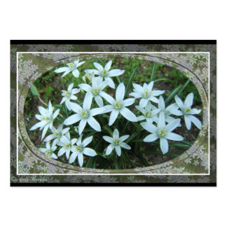 Star of Bethlehem lace ~ ATC card Large Business Cards (Pack Of 100)