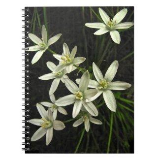 Star of Bethlehem Notebook