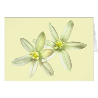 Star of Bethlehem Notecard