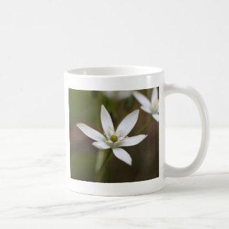Star-of-Bethlehem (Ornithogalum umbellatum) Coffee Mug