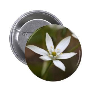 Star-of-Bethlehem (Ornithogalum umbellatum) Pinback Button