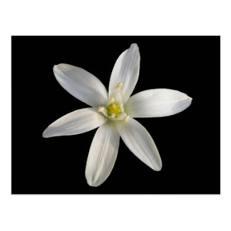 Star of Bethlehem ~ postcard