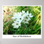 Star of Bethlehem Poster