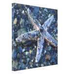 Star of the Beach Canvas Prints