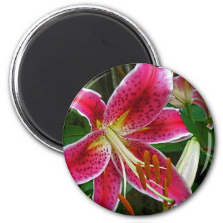 Star of the Garden by Nature Bug 2 Inch Round Magnet