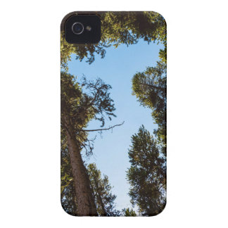 Star Of The Pine Tree Forest iPhone 4 Case