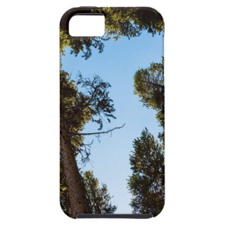 Star Of The Pine Tree Forest iPhone SE/5/5s Case