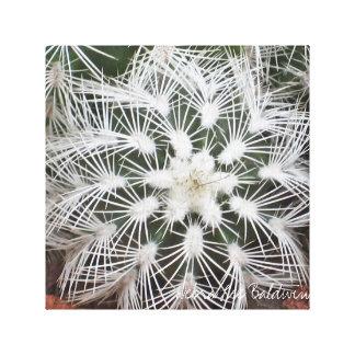 Star-shaped cactus by Debra Lee Baldwin Canvas Print