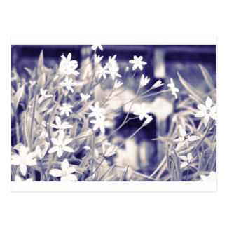 Star-shaped Flowers Sparkle, Postcard